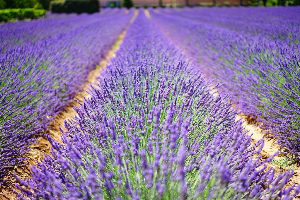 PROVENCE TROCHU JINAK - Provence