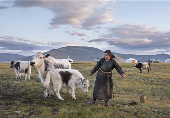 Mongolsko zemědělské - Mongolsko