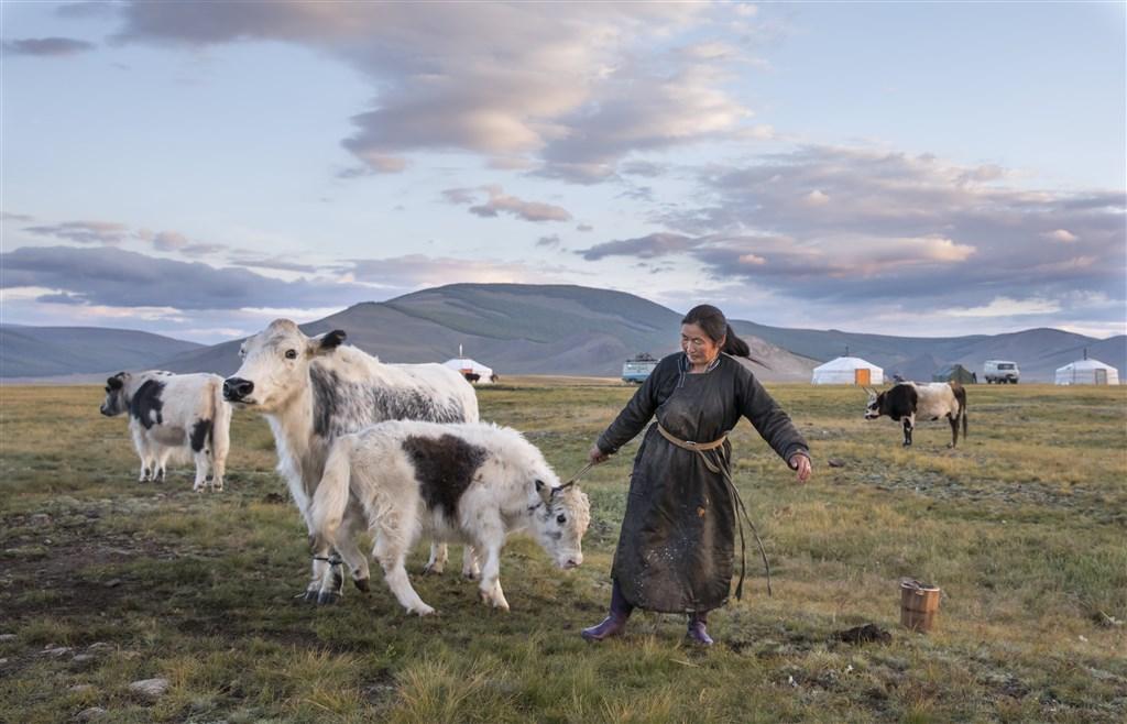 Mongolsko - chov hospodářských zvířat - Mongolsko